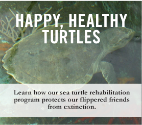Happy, Healthy Turtles