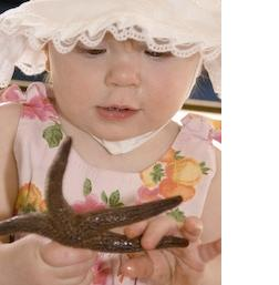 Child Holding Starfish at Gulf Specimen Aquarium