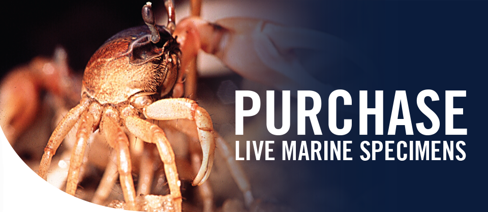Purchase Live Marine Specimens