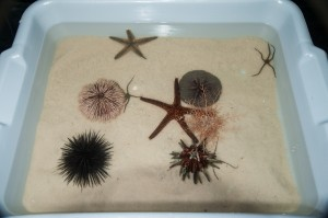 AS-24 ECHINODERM ASSORTMENTS